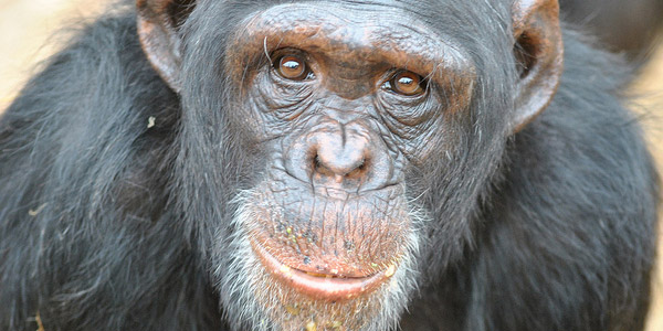 Can the Inner Chimp support my Decision Making?